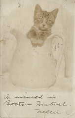 """""""A. insured in Boston Mutual. Nellie."""" 1906 (912greens) Tags: postcards cats pitchers realpostcards 1900s"""