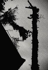 forme diverse.... (sicca85) Tags: canon blackwhite nero biancoenero sfondo monocromo astratto albero sera italia home giocodiluce