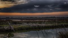 Les flamants (Fred&rique) Tags: lumixfz1000 photoshop cameraraw hérault hdr étangs eau oiseaux flamant canal pêche ciel nuages crépuscule paysage landscape sky lake clouds