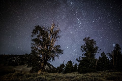 Ancient Bristlecone Forest, CA (Jeffrey Beringer) Tags: ancient bristlecone pine star anti trails dark sky jeffrey beringer clear grandview campground eastern sierra big bishop ca astrophotography canon 6d rokinon night romance science shows sports style syndicated local top video tv tak berkategori the lead thoughts travel weather world features film gallery genel health media mma junkie ncaaf photos spanning sec technology usa today