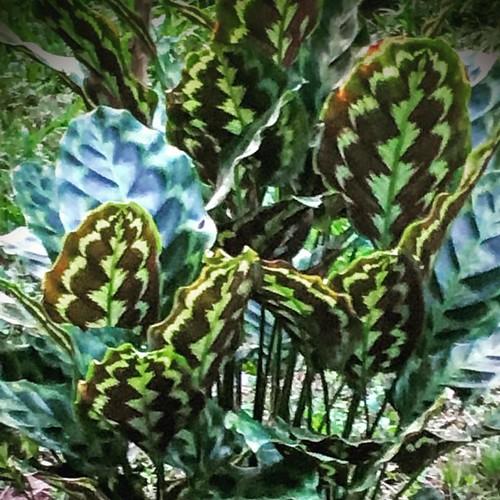 #plante #puravida #costarica