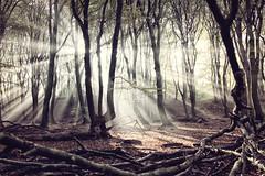 magical morning (etsie74) Tags: wood forest magic fairytale sun fog sunbeam sunray rays ray foggy romantic mood dream fantasy speulderbos garderen