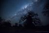 43-Botswana_2016 (Beverly Houwing) Tags: africa botswana desert islandoflostbaobabs kalahari mgadikgadipans saltpan night astrophotograhy sky stars milkyway galaxy wideangle silhouette tree baobab longexposure