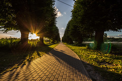 Horizon (lensflare82) Tags: horizon horizont sonne sun soleil sunbeam ray sonnenstrahl weg strase pflaster pavement road path tree baum ast branch laub blatt leaf canon eos 700d shutterbug natur nature outdoor herbst autumn sommer summer decay trist hopeful atmosphere atmosphre ausblick view panorama landschaft landscape sky himmel ciel wolke cloud nuage lensflare schatten shadow