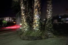 Sidewalk palms (ADMurr) Tags: la eastside city terrace workman street red tail light leica m 35mm zeiss zm explore