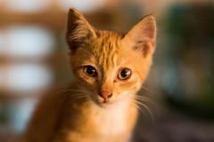 Now featuring: Kitten near the road by jaredlucow mitakon... (flavoredtape) Tags: beyondbokeh