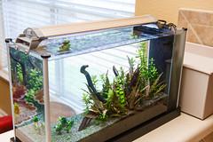 15-002-0329.jpg (Nate Griffin) Tags: aquarium flash topless strobe specv sb28 ceilingbounce finnex 12cto plantedplus wwwspectankscom