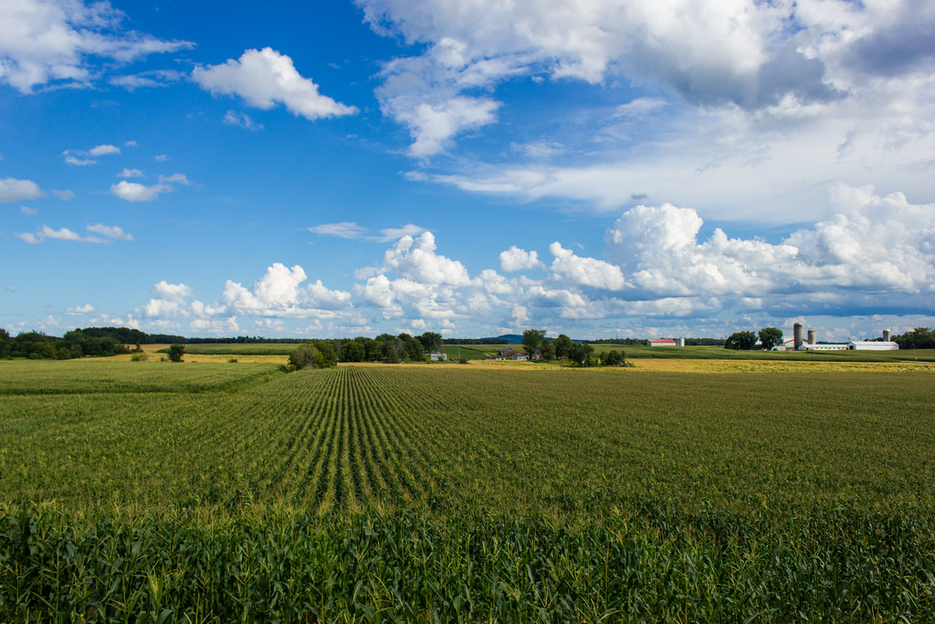 Campagne - Rural