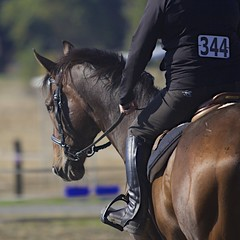 EquiSpirit September Schooling Show (kellimatthews) Tags: oregon horseshow equestrian pleasanthill hunterjumper schooling