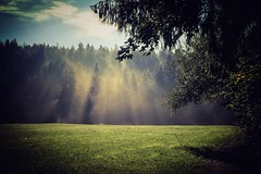 Early Morning (edelweisskoenig) Tags: iphone 6plus 6 iphone6plus landscape trees woods fog wald wiese nebel landschaft meadow sun sonne ray strahlen morning morgen grass sky himmel iphoneography kaufbeuren dunst haze landscapes landschaften landscapephotography landschaftsfotografie travel travelphotography reise reisen reisefotografie fernweh