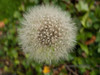 Seedheads and seed pods - 7 (Jackie & Dennis) Tags: september seedpods challenge seedheads 2015 shootaboot
