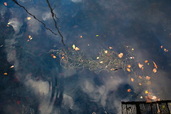 Water series 1 (afa.nata) Tags: lake reflection water leaves see wasser reflektion watersurface reflectedsky вода синий отражение отражениевводе поверхностьводы листьянаводе