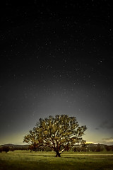 Tree at Night. (Bill Thoo) Tags: nightphotography tree field night rural stars dusk farm sony country ngc australia nsw westernnsw a7r tomingley goobangnationalpark