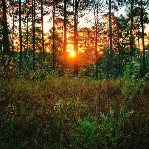 Sun rising in Tuskegee National Forest - #sunrise #sun #sunshine #tuskegee #nationalforest #forest #trees #shrubbery #landscape #scene #scenery #view #visitalabama #countryside #ig_countryside #beauty #serenity #thesouthernfront #theamericancollective #th