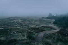 IMG_6799.jpg (nixpix88) Tags: fog denmark nationalpark nebel dunes dnemark nordsee thy nationalparkthy wwwnixpixde