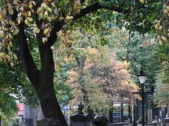 Autumn foliage in St Nicholas Churchyard, Union Street, Aberdeen (iainh124a) Tags: uk scotland sony cybershot aberdeen sonycybershot iainh124a dx90 dschx90 dschs90v dx90v