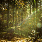 on a sunny november day in the woods thumbnail
