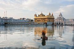Sikh y el templo dorado (matiasleturiaphotos) Tags: india amristar agosto2012