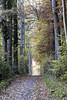 IMG_3198-Modifier (mycenium) Tags: wood mushroom canon belgium region foret brabant champignon bois 6d wallon wallonie wallone belgiquie
