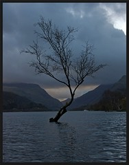 December 4th. (peterdouglas1) Tags: trees lakes llanberis llynpadarn thattree