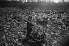Scan-151107-0021 (Oleg Green (lost)) Tags: morning autumn blackandwhite bw film 35mm husky child outdoor voigtlander country rangefinder 400 1735 fomapan ultron hexarrf wolvedog