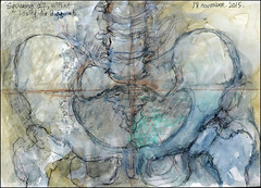 Squaring off, without losing the diagonal.  18 november, 2015. (Sharon Frost) Tags: skeleton paintings drawings anatomy bones spine hip femur sketches pelvis journals sharonfrost daybooks femoralneck