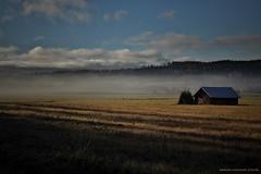 Foggy morning (MIKAEL82KARLSSON) Tags: morning sweden natur foggy sverige morgon dimma mikael82karlsson