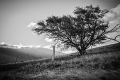 Piilani Highway (Jason Carpenter) Tags: bw landscape geotagged hawaii us blackwhite unitedstates maui kula reallyrightstuff rrs westmaui bh55 d700 nikond700 1424mmf28g jasoncarpenter silverefexpro2 tvc33 maui2013