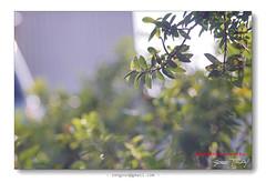 DSC01517 (猜猜 Guess TSAI) Tags: lens sony f45 a7 ussr 145 110mm 11cm industar23u