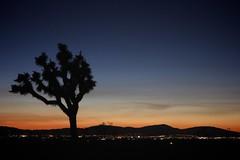 above the desert town (Karol Franks) Tags: sunset desert palmdale ca socal joshuatree city lights ©karolfranks okarolyahoocom
