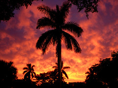Meteorology - Beaches - Clouds - Nature etc. (Jaye Eryk) Tags: bight sunset tropical palmtrees florida clouds orange red hues