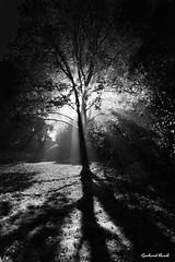 Light and fog ... (Gerhard Busch) Tags: autumn fog mist tree light