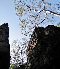 the trees over Preah Khan (SM Tham) Tags: asia cambodia angkor unescoworldheritagesite preahkhan khmer stone temple architecture buildings walls basreliefs stonecarvings trees sky outdoors