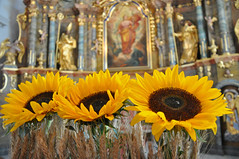 Blumenschmuck (Mariandl48) Tags: sonnenblumen altar getreide pfarrkirche wenigzell steiermark austria