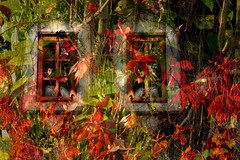 The air Is wild with leaves (SolanoSnapper) Tags: autumnleaves leaves treatthis kreativepeople exploreworthy 6ws awardtree