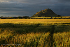 End Of The Day (ajp~) Tags: thelaw northberwick northberwicklaw eastlothian scotland hill fields barley sky clouds farmland farming agriculture sunsetlight shadow landscape canon 6d canon24105mmf4l alanjohnstone