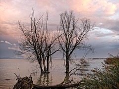 trasimeno 4 (lotti roberto) Tags: assisi trasimeno lago lake autumn trees tramonto sunset umbria