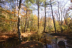Autumn in Norris Reservation (Read2me) Tags: autumn fall trees foliage leaves norrisreservation pree she cye river stream thechallengefactorywinner perpetualchallengewinner 15challengeswinner challengeclubwinner gamesweepwinner friendlychallenges