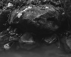Rock and Burn (Stanley Burn Woods) (Jonathan Carr) Tags: rock stone burn stream longexposure abstract abstraction landscape rural northeastuk black white bw monochrome toyo45a largeformat 4x5 5x4