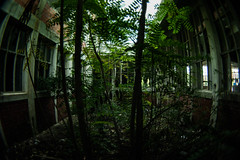 Blear witch (Vucko234) Tags: urban nature abandoned jungle