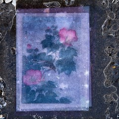 Prsent (Gerard Hermand) Tags: 1610164857 gerardhermand france paris canon eos5dmarkii formatcarr uvre art artwork fleur flower vitre pane verre glass