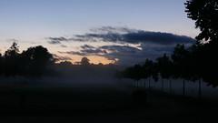 Brouillard au couchant - Saulzais-le-Potier - Cher - Berry - Centre-Val de Loire - France (vanaspati1) Tags: brouillard au couchant saulzaislepotier cher berry centreval de loire france fog soir arbres trees vanaspati1