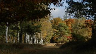 Autumn in Schoonloo