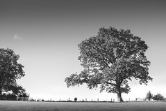 Chew Magna Tree (Scott Bunker) Tags: nikon chewmagna d5000 landscape tree blackandwhite