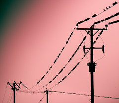 Bird on a Wire.. with a few friends. (Rep001) Tags: birds wire 3951