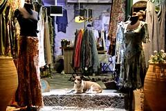 IMG_0593 (iakxos) Tags: dog shopping night color island gurd