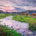 Sunset Harry's Farm-2.jpg