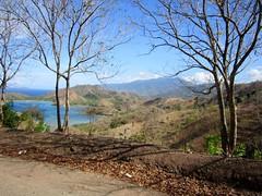 BETWEEN TREES (PINOY PHOTOGRAPHER) Tags: mati city davao oriental sur mindanao tree philippines asia world