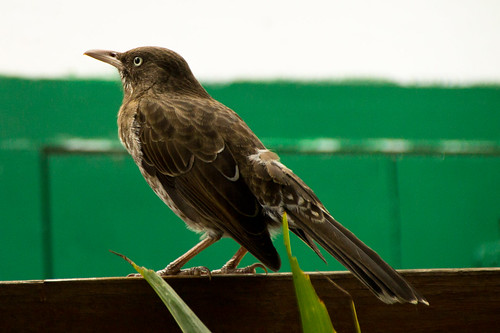 nov 16 021 bird