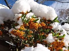 Schnee (Gartenzauber) Tags: winter schnee natur november sony neustadt schleswigholstein itisaniceday flickrlovers